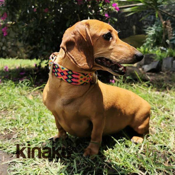 KINAKU Collars and dogs accesories handmade from Mexico Collar Merida 5