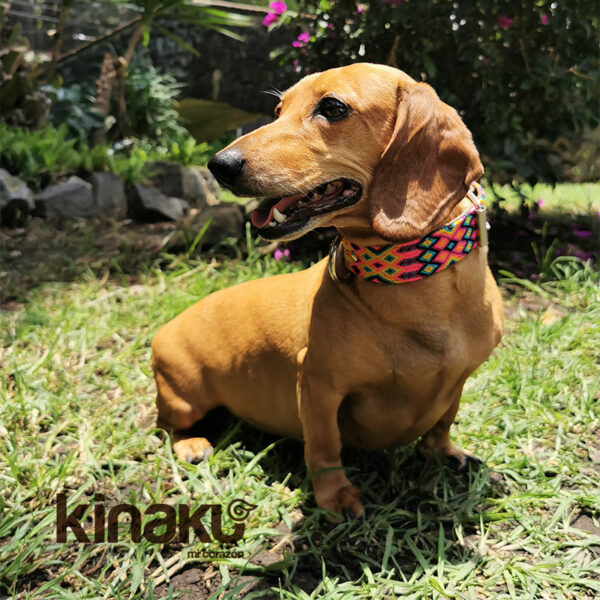KINAKU Collars and dogs accesories handmade from Mexico Collar Merida Gallery 1
