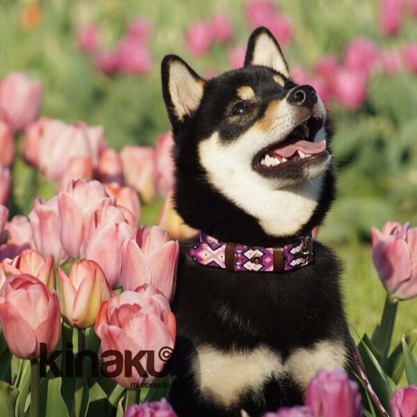 KINAKU Collars and dogs accesories handmade from Mexico Collar Tonina Gal1