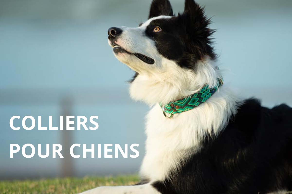 KINAKU Collars and dogs accesories handmade from Mexico COLLIERS